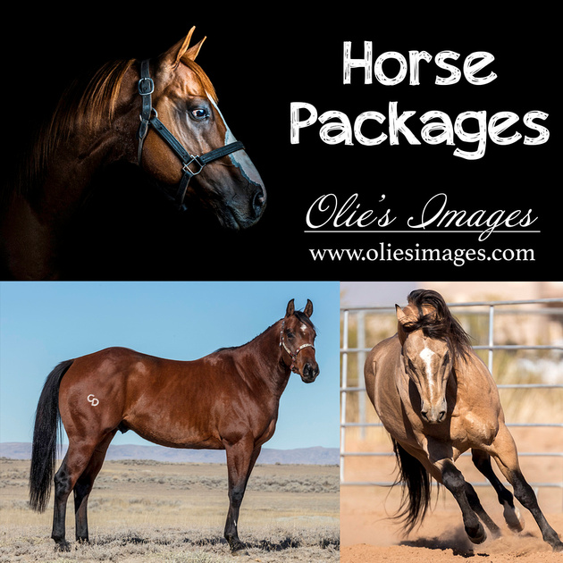 Horse Packages